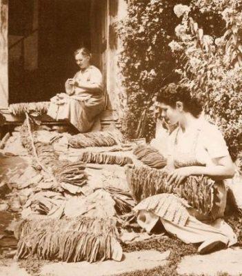 Αρμάθιασμα καπνού (Αμπελώνας Λάρισας-φωτογραφία του Δημήτρη Τσάλτα)